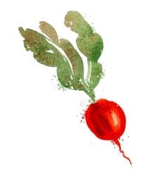 radish logo design template vegetables or vector image vector image