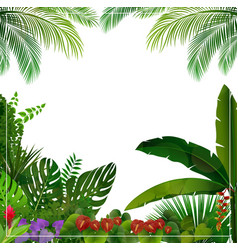 tropical jungle on white background vector image vector image