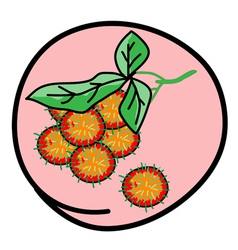 Fresh Juicy Rambutans on Round Pink Background vector image vector image