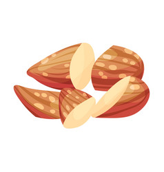 Cracked almond kernel without nutshell vector