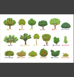 different garden berry shrubs sorts with names set vector image