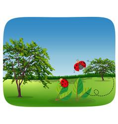 Ladybug in nature landscape vector