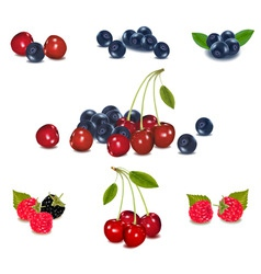 Mega set berries vector