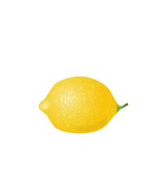 Photorealistic Lemon Isolated vector image