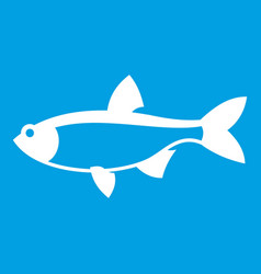 rudd fish icon white vector image