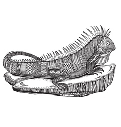 Hand drawn graphic ornate iguana on a stone vector image