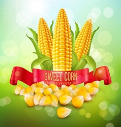 Background with grains and cobs of corn and red ri vector