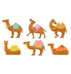 cartoon camel funny desert animals with saddle vector image