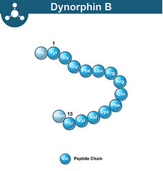 Dynorphin B abstract chemical model amino acid vector
