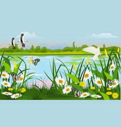 Location of the swamp with grass trees flowers vector