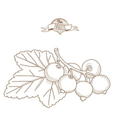 outline hand drawn blackcurrants with leaves flat vector image