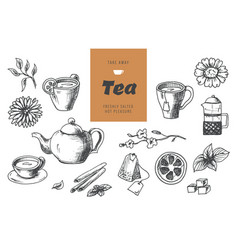 tea collection elements in graphic style hand vector image