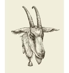 Hand drawn goat Sketch a farm animal vector image