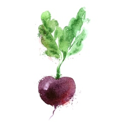 beet logo design template vegetables or vector image