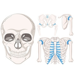 Human skull and other parts of bones vector