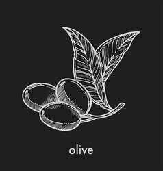 olive on small stem with leaves monochrome sketch vector image