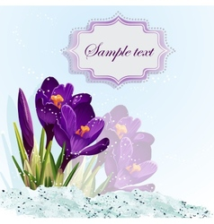 romantic background with crocuses vector image