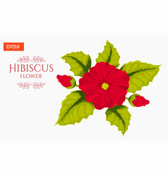 card with hibiscus flower isolated on white vector image