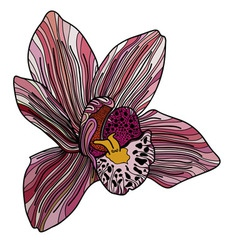Exotic orchid painted in pink colors vector image