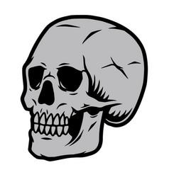 gray human skull template vector image