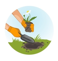 Hands planting flowers in garden vector