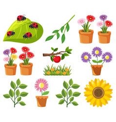 large set nature with flowers and leaves vector image