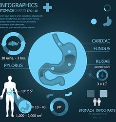 Stomach Infocharts vector image