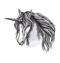 Unicorn horse fairy tale animal sketch vector
