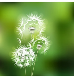Abstract green background with flower dandelion vector