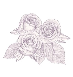 Bouquet with three roses isolated on white vector