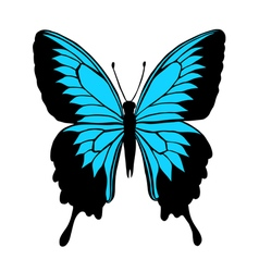 butterfly with black and blue wings vector image