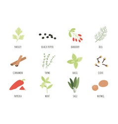 Spices and herbs cartoon black pepper basil and vector