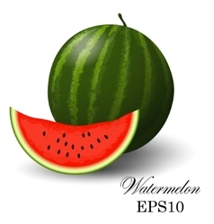 Watermelon on a white background vector