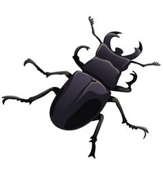 Black beetle stag on a white background vector