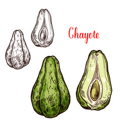 Chayote vegetable of exotic mexican plant sketch vector