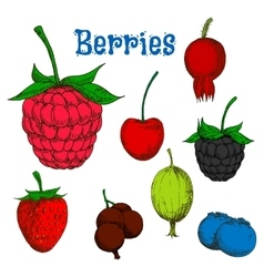 Ripe colorful berry fruits sketches vector image