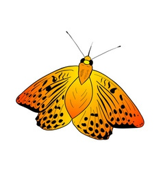 simple orange butterfly on the white vector image vector image