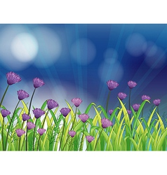 A garden with fresh violet flowers vector