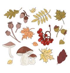 Autumn treasure fall season nature vector