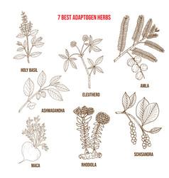 Best adaptogen herbs vector