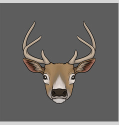Head of deer portrait of wild animal hand drawn vector