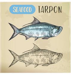 Tarpon sketch for shop or store signboard vector