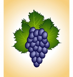 close up purple grape isolated vector image