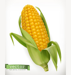 Corn cob 3d icon vector