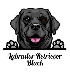 Head labrador retriever black - dog breed color vector