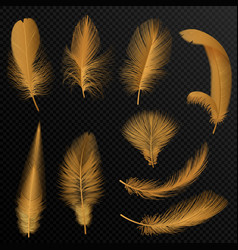 realistic luxury golden tribal feathers set vector image