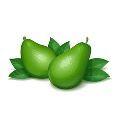 ripe juicy avocado vector image