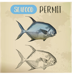 Sketch of permit or game fish seafood vector