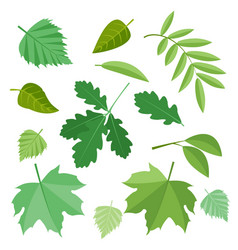 collection of green leaves vector image vector image