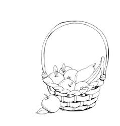 Fruit basket hand drawn vector